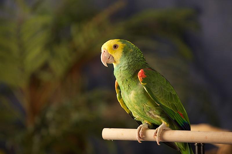5 Cara Merawat Burung Lovebird Paling Dasar Dan Cocok Bagi Pemula